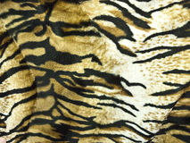 Tiger Skin Background. A fluffy skin of a tiger Royalty Free Stock Images