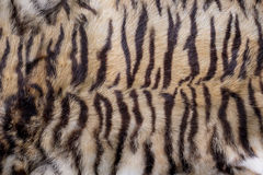 Bengal Tiger Skin, Fur Texture Stock Photography