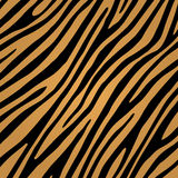 Tiger skin pattern Royalty Free Stock Images