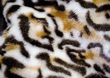 Tiger skin pattern conch design stock image