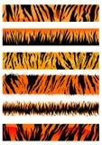 Tiger skin patterns Royalty Free Stock Photo