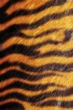 Tiger skin texture. Texture of wild cat skin Stock Photos