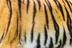 Tiger skin Royalty Free Stock Images