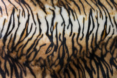 Tiger skin or tiger leather texture stripe pattern closeup backg Stock Photography
