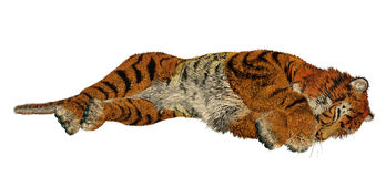Tiger sleeping Stock Photo