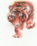 Tiger slinking Stock Photos