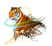 Tiger splash with light trails Stock Image