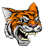 Tiger Sports Mascot. A mean looking tiger sports mascot animal Stock Images