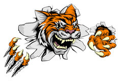 Tiger sports mascot ripping through wall Royalty Free Stock Image