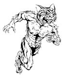 Tiger sports mascot running. A tiger man character or sports mascot charging, sprinting or running Royalty Free Stock Images