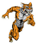 Tiger sports mascot running. A tiger man character or sports mascot charging, sprinting or running Stock Images