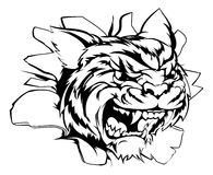 Tiger sports mascot smashing out. Tiger breakthrough illustration of a red dragon breaking out Stock Photos