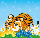Tiger and spring flowers. Stock Photography