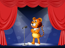A tiger in the stage Royalty Free Stock Images