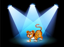 A tiger at the stage with spotlights Stock Images