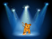A tiger at the stage with spotlights Royalty Free Stock Photo