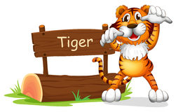 A tiger standing at the right side of a sign board Royalty Free Stock Image