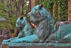 Tiger Statues at Princeton University. The twin tiger statues at the entrance of Nassau Hall on the campus of Princeton University in Princeton, New Jersey Stock Photos