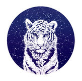Tiger and stellar sky. Сolor graphic illustration Stock Photography