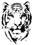 Tiger Stencil Vetor Imagens de Stock