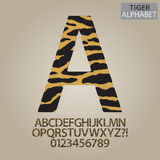 Tiger Stripe Alphabet and Numbers Vector Stock Photos