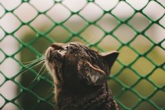 Tiger-Striped Cat Head Profile. Photo of cat looking up. Profile of cat royalty free stock images