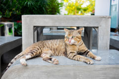 Tiger striped cat laying on concrete bench. In small garden stock image