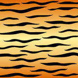 Tiger stripes Stock Image