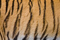 Tiger Stripes Royalty Free Stock Photos