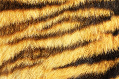 Tiger stripes on real animal leather stock photos
