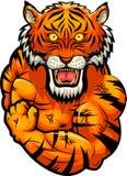 Tiger strong mascot. Stock Photography
