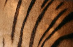 Tiger structure Royalty Free Stock Images
