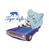 Tiger style Stock Image