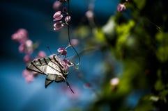 Tiger Swallowtail Lizenzfreies Stockfoto