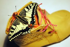 Tiger swallowtail butterfly sitting on children`s leather brown boot with pink lace and sock royalty free stock photo