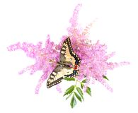 Tiger Swallowtail (Papilio Glaucus) Butterfly on A Royalty Free Stock Photography