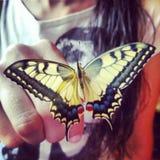 Tiger Swallowtail Papilio Glaucus Butterfly op een Vrouwen` s Vinger Stock Foto