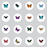 Tiger Swallowtail réaliste, insecte d'été, éléments d'Azure Peacock And Other Vector Ensemble de symboles réalistes de mite égale Photographie stock