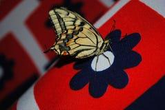 Tiger swallowtail Schmetterling, der auf dunkelblauer Druckblume, weiches rotes gestreiftes bokeh sitzt stockbild
