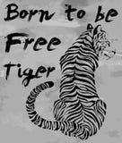 Tiger t-shirt graphic slogans vector design Stock Images