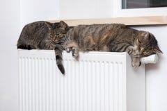 Cat on the radiator, warm, Tabby cat lying a warm radiator. A tiger tabby cat relaxing on a warm radiator, Tabby cat lying a warm radiator, cat lies on the stock photos