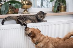 Cat on the radiator, warm, Tabby cat lying a warm radiator. A tiger tabby cat relaxing on a warm radiator, Tabby cat lying a warm radiator, cat lies on the stock image