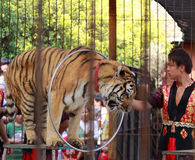 Tiger-tamer Stock Photos