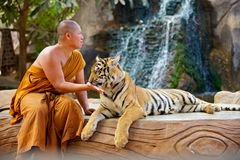 Tiger Tample royalty free stock photo