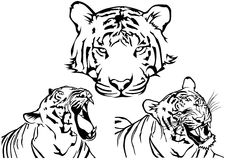 Tiger Tattoo Drawings Royalty Free Stock Photo