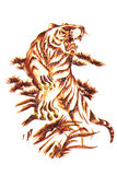 Tiger Tattoo Macro Isolated. Isolated macro image of a tiger tattoo royalty free stock image