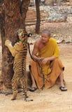 Tiger Temple em Kanchanaburi Imagem de Stock