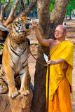 Tiger Temple, Thailand Royalty Free Stock Image