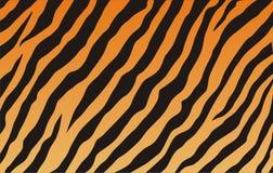 Tiger texture Stock Photos