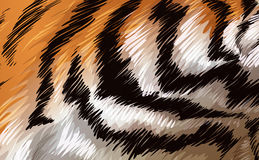 A tiger texture Royalty Free Stock Image